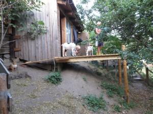 Konstantin und Kilian beim Ziegenfüttern